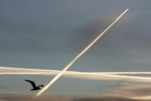 Red Flag Alert SF Gate Pushes Contrail